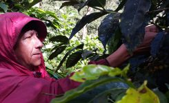 Can Coffee Pay for Land Restoration?